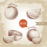 Hand drawn sketch style orange fruit compositions set. Whole fruit and slices. Hand made vector citrus fruit illustration. On old looking background Stock Images