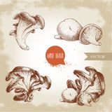 Hand drawn sketch style oyster mushroom bunches set. Fresh farm food vector illustrations collection. EPS10 + JPEG preview royalty free illustration