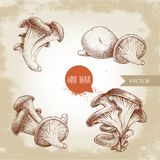 Hand drawn sketch style oyster mushroom bunches set. Fresh farm food vector illustrations collection. Stock Photography