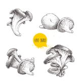 Hand drawn sketch style oyster mushroom set isolated on white background. Fresh farm food vector illustrations Royalty Free Stock Images