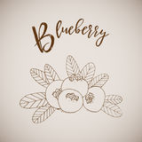 Hand drawn sketch style painting blueberry Royalty Free Stock Photos