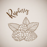 Hand drawn sketch style painting raspberry Stock Photos