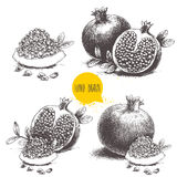 Hand drawn sketch style pomegranates set. Stock Photography