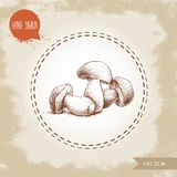 Hand drawn sketch style porcini mushroom composition. Fresh forest boletus edulis. Italian food ingredient. Fresh market product Royalty Free Stock Images