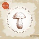 Hand drawn sketch style porcini mushroom. Fresh forest boletus edulis. Italian food ingredient. Fresh market product Royalty Free Stock Images