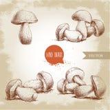 Hand drawn sketch style porcini mushroom set. Fresh forest boletus edulis. Italian food ingredient. Stock Photo