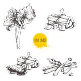 Hand drawn sketch style rhubarb set. leaves, bunches cut and whole with strawberries composition. Organic food component vector il. Lustration isolated on white Royalty Free Stock Image