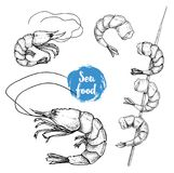 Hand drawn sketch style seafood set. Shripms, prawns, grilled shrimps on bamboo stick. Collection vector illustrations Stock Photos