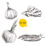 Hand drawn sketch style set illustration of different spices .   Garlic, ginger root, onion and red hot chili peppers. Hand drawn sketch style set illustration Stock Photography