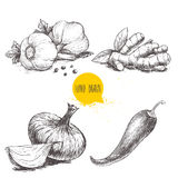 Hand drawn sketch style set illustration of different spices. Garlics with black peppers, ginger root, onion and red hot chili pep Royalty Free Stock Photos