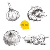 Hand Drawn Sketch Style Set Illustration Of Different Spices Isolated On White Background. Garlic, Ginger Root, Onion And Sliced R Stock Image