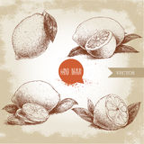 Hand drawn sketch style set of lemon fruit with leafs and sliced lemon. Royalty Free Stock Image