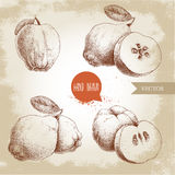 Hand drawn sketch style set of quinces. Quince apple with leaf, group of quinces and sliced quince. Eco fruit vintage vector illustration royalty free illustration