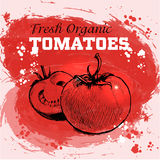 Hand drawn sketch style tomatoes Stock Photography