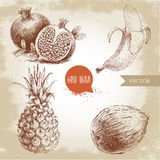 Hand drawn sketch style tropical fruits set. Banana, coconut, pineapple and pomegranates with seeds. Vintage eco food illustration Royalty Free Stock Photos