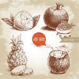 Hand drawn sketch style tropical fruits set. Half of lemon with leaf, coconut cocktail, pineapple with slices and pomegranates wit. H seeds. Vintage eco food Stock Photo