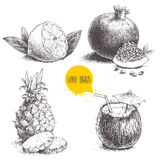 Hand drawn sketch style tropical fruits set isolated on white background. Half of lemon with leaf, coconut cocktail, pineapple wit. H slices and pomegranates Royalty Free Stock Images