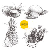 Hand drawn sketch style tropical fruits set isolated on white background. Slice of lemon with leaf, half of coconut, pineapple and. Pomegranates with seeds Stock Photo