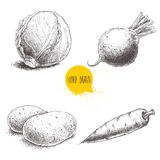 Hand drawn sketch style vegetables set. Cabbage, beet root, potatoes and carrot. Stock Image