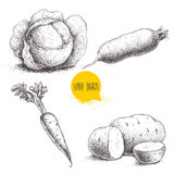 Hand drawn sketch style vegetables set. Cabbage, beet root, potatoes and carrot with leafs. Royalty Free Stock Photos