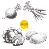 Hand drawn sketch style vegetables set. Cabbages, beet root with leafs, potatoes and bunch of carrots. Stock Images