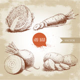 Hand drawn sketch style vegetables set. Half of cabbage, beet root, potatoes and sliced carrot. Royalty Free Stock Photo