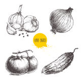 Hand drawn sketch style vegetables set. Tomatoes, onion, cucumber and garlics with pepper. Stock Image