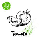 Hand drawn sketch style whole tomatos half and quarter segment sliced. Eco food vector illustration poster. Stock Image