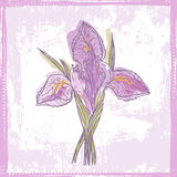 Hand drawn  sketch of tender violet watercolor iris  flower Stock Images