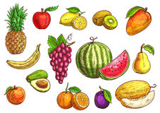 Hand drawn sketch of tropical and exotic fruits. Royalty Free Stock Image