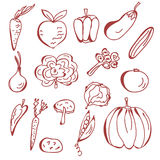 Hand drawn sketch of vegetables Stock Image