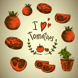 Hand Drawn Sketch of vegetables, Tomatoes. Royalty Free Stock Images