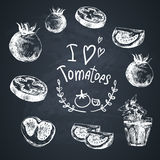 Hand Drawn Sketch of vegetables, Tomatoes. Royalty Free Stock Photography