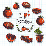 Hand Drawn Sketch of vegetables, Tomatoes. Royalty Free Stock Photo