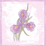 Hand drawn  sketch of watercolor iris  flower Royalty Free Stock Images