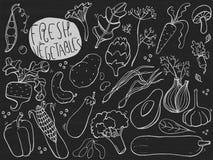Hand drawn sketches for fresh vegetables. Illustration on chalkboard. royalty free illustration