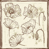 Hand drawn sketches of poppy flowers Royalty Free Stock Images