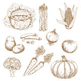 Hand drawn sketches of vegetables Royalty Free Stock Photo