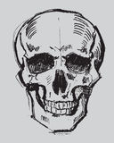 Hand drawn skull Royalty Free Stock Photography