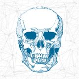 Hand drawn skull. Vector illustration. Royalty Free Stock Photo