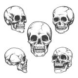 Hand drawn skulls Royalty Free Stock Images