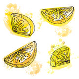 Hand drawn slices of lemon with juicy yellow paint splashes. Royalty Free Stock Photography
