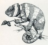 Hand drawn smiling chameleon royalty free illustration
