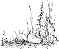 Hand drawn snail in the grass Stock Photo