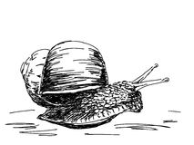 Hand drawn snail Royalty Free Stock Image