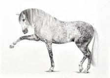 Hand Drawn Spanish Horse Stock Photo