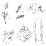 Hand drawn spice herbs Stock Photography