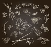Hand drawn spices Stock Photography