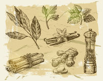 Hand drawn spices Royalty Free Stock Photos