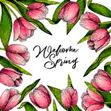 Hand Drawn Spring Floral Banner. Colored Pink Tulip. Welcome Spring. Hand Drawn Detailed Engraved Illustration. Good For